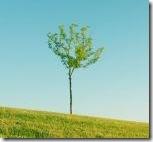 lonely_tree_3