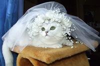 Брак с кошкой – такое возможно?