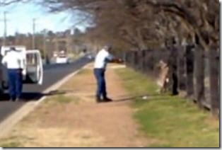 Police shoot kangaroo
