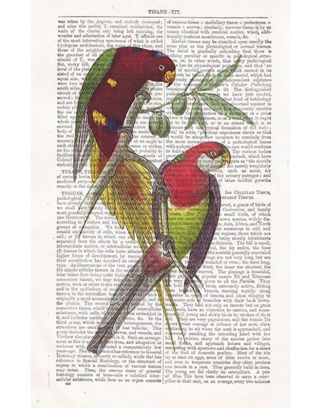 parrot 7