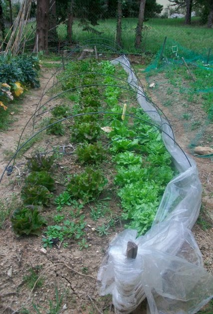 un jardin potager en languedoc fin mars semis et. Black Bedroom Furniture Sets. Home Design Ideas