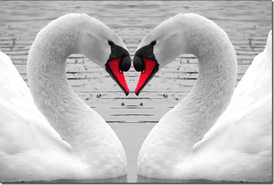 corazones 14febrero-net (14)