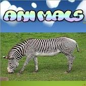 Baby Flash Card Animals Free
