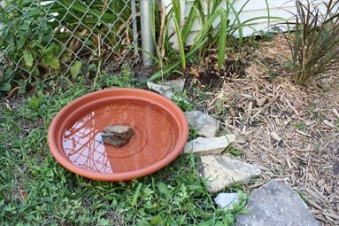 cheap bird bath