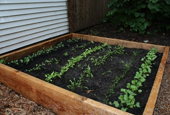 raised fall garden bed