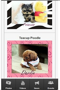Teacup Puppies - screenshot thumbnail