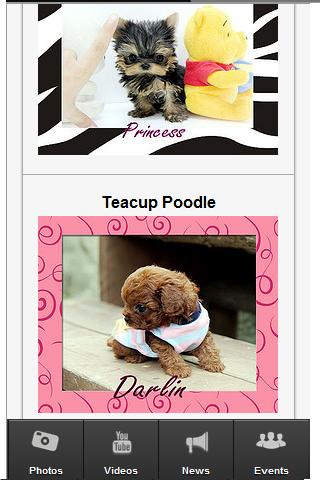 Teacup Puppies - screenshot