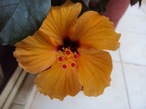 What Flowers You Can Grow In Your Balcony Dress Your Home Best