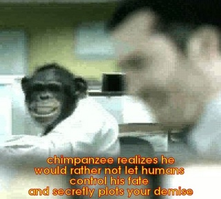 chimpanzee want to kill humans