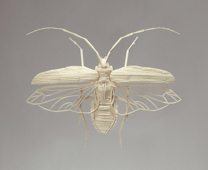matchstick-insects7