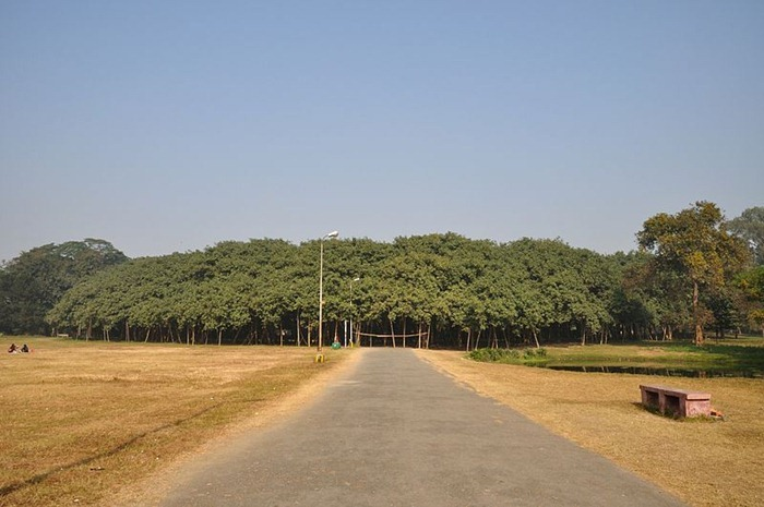 great-banyan-tree7