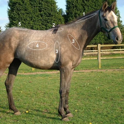 Horse Body Condition Scoring LOGO-APP點子