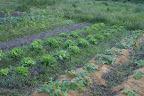 太平山自然農園おくちゃん