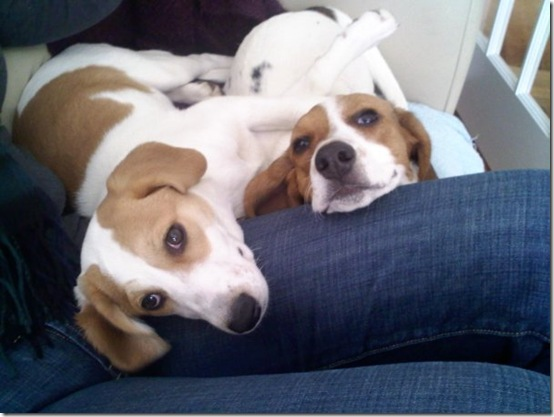 Lexi & Leeloo from Carollyn Hammersmith in Washington, DC