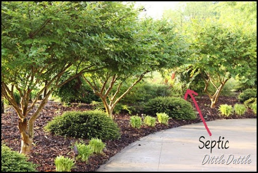 Landscaping Ideas With Crepe Myrtles Pdf