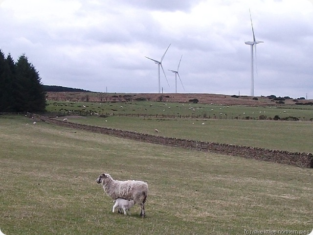 lambs and wind generators