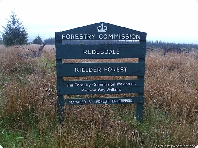kielder forest on the pw