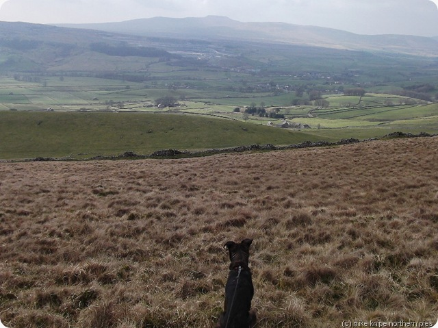 dawg considers ribblesdale