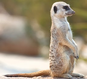 Ya estoy en Maverick Meerkat