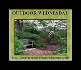 OutdoorWednesdaybutton54333333333332[1]