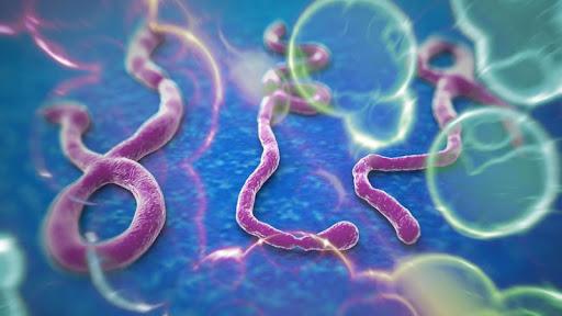 Facts on Ebola Virus