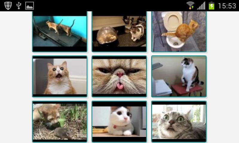 Videos de gatos - screenshot