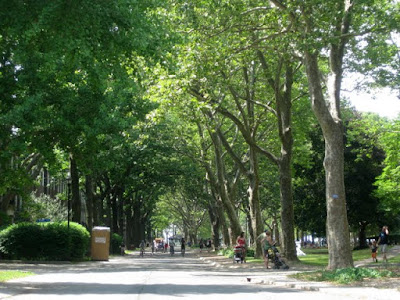 Tree-lined street on Governors Island - Photo by Taste As You Go