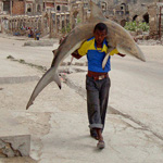 A man carries a shark through the streets of Mogadishu September 23, 2010.  REUTERS/Feisal Omar (SOMALIA - Tags: SOCIETY CITYSCAPE IMAGES OF THE DAY)ㄡ䄇≑ᐲ煡䊁㌣ᖑ励㑢