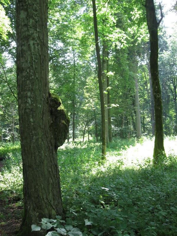 Jedyny w puszczy miś - miś koala na drzewie :)