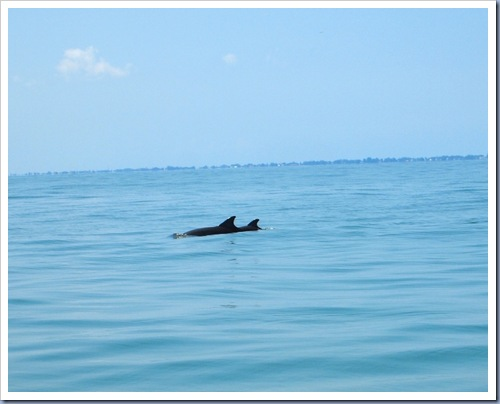 Dolfijn10