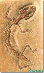 fosil lagarto