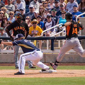 He's out! by Brent Dreyer - Sports & Fitness Baseball ( baseball, sports, spring training, people,  )