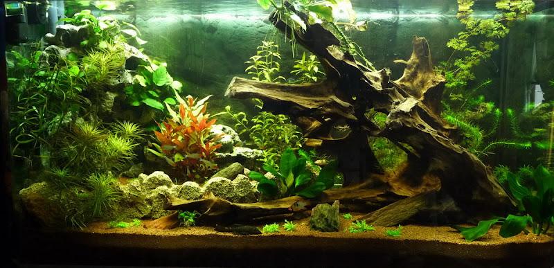 Decor Aquarium Crevettes