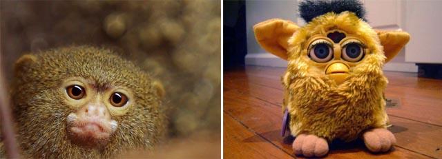 Furry fandom