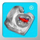 CARDIO3 3D ECHO - Lite icon