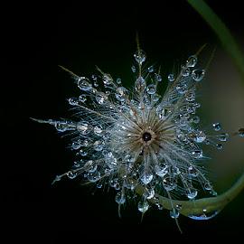 by Elang Wahyudi - Nature Up Close Natural Waterdrops