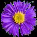 Glacier Wildflowers Icon