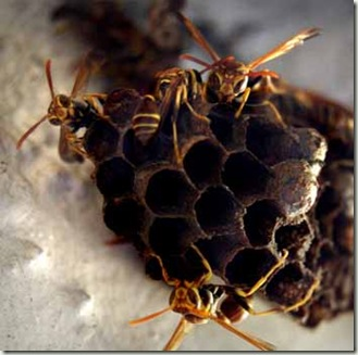 wasps 2