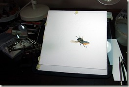 desk and megachile