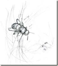 rufa sketch