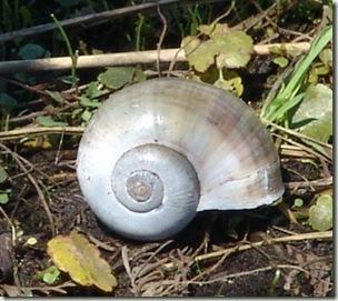 snail.sm jpg