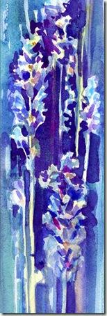 lavender sm