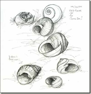shell sketches sm