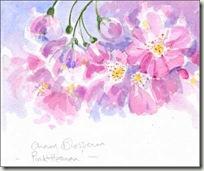 cherry blossom sm