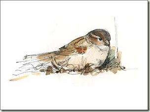 sparrow f sm