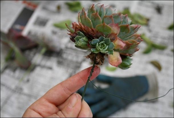 succs5 flora grubbs