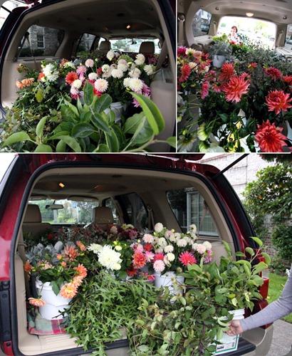 flowers mckenzie powell expedition