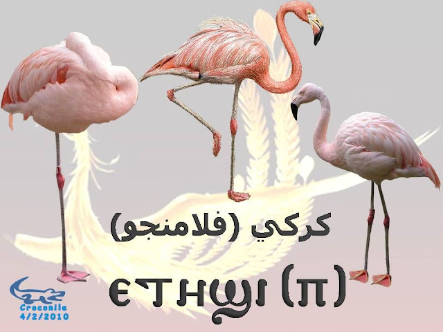 775ce4ee2 بالصور أسماء الكائنات بالقبطي من الفيل الي النملة روعه - منتدى الفرح ...