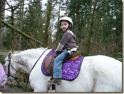 Horses 056
