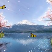 Mt. Fuji Sakura Trial
